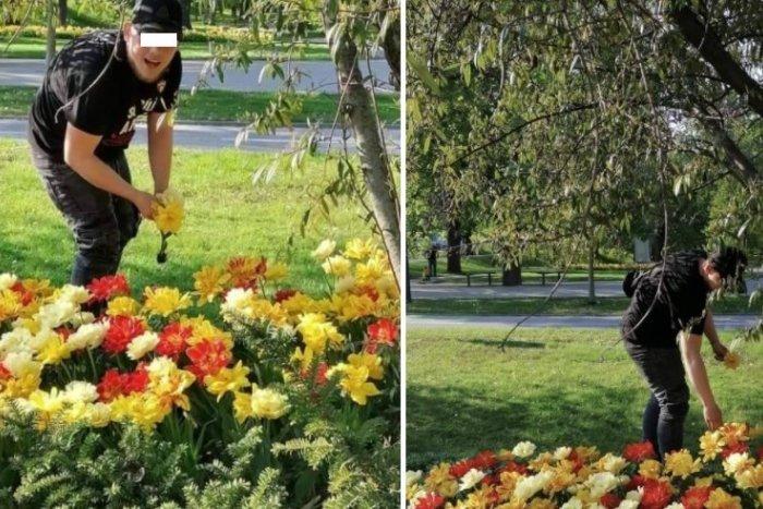 Ilustračný obrázok k článku Trhal kvety vysadené mestom a ešte bol drzý: Peter Bročka na muža hneď zareagoval