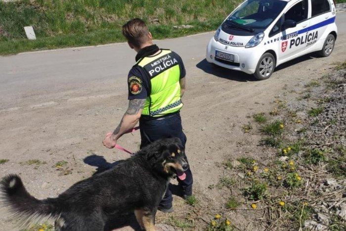 Ilustračný obrázok k článku Mestskí policajti sa dočkali krásnych slov: Čím si získali vďačnosť Zvolenčanov?