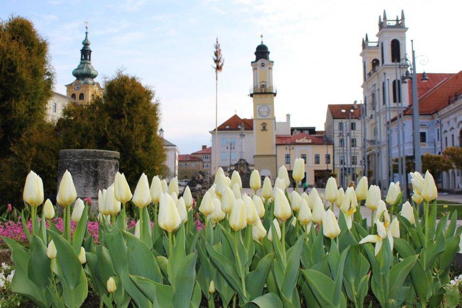 Ilustračný obrázok k článku Bystrica v týchto dňoch hýri farbami: Po celom meste rozkvitli kvetinové záhony, FOTO