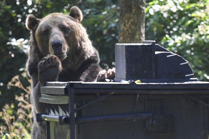 Ilustračný obrázok k článku Chodia sa medvede kŕmiť do kontajnerov? Takáto je situácia v obciach pri Zvolene
