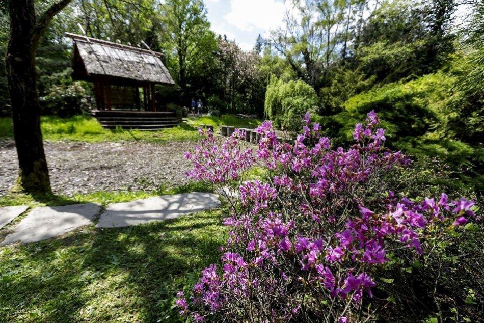 Ilustračný obrázok k článku Arborétum Tesárske Mlyňany láka návštevníkov: Na jar opäť rozkvitlo do krásy, FOTO