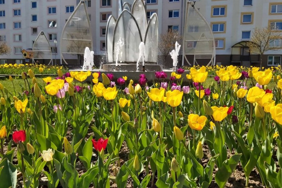 Ilustračný obrázok k článku Jar konečne dorazila aj do Popradu: Mesto rozkvitá všetkými farbami, FOTO a VIDEO