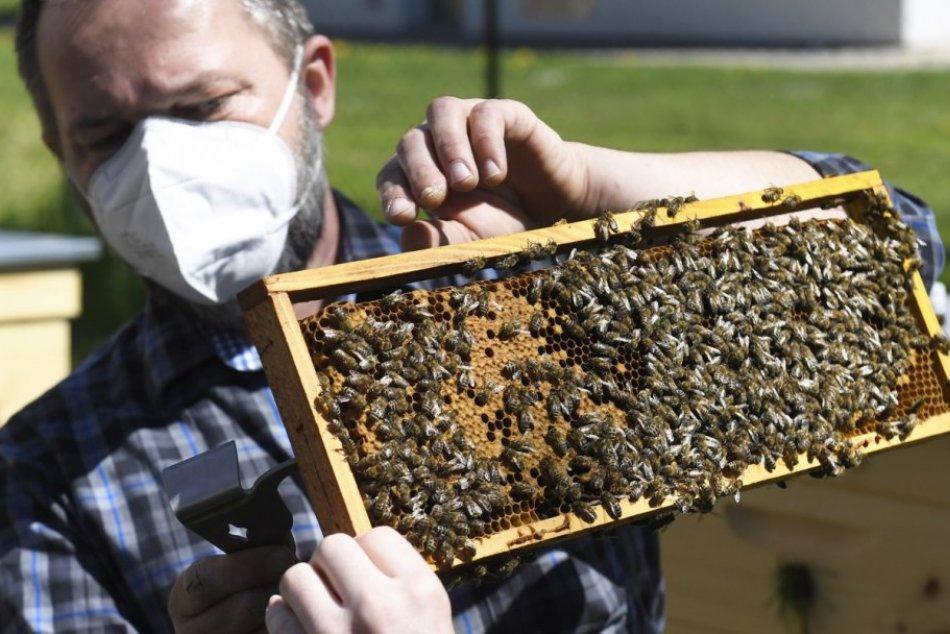 Ilustračný obrázok k článku Chcete spoznať včelárstvo a jeho históriu? Brezňania majú teraz jedinečnú šancu