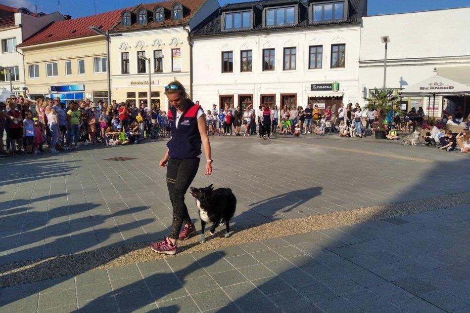 Ilustračný obrázok k článku Zvolenským námestím znel brechot psov: Padol dokonca poriadne netradičný rekord, FOTO
