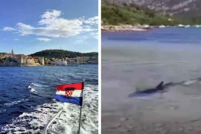Ilustračný obrázok k článku Šokujúce VIDEO z Chorvátska: Dovolenkárov vystrašil na pláži žralok!