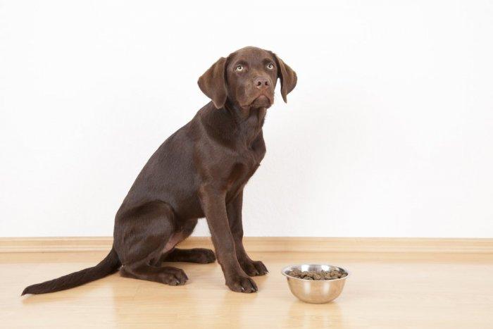 Ilustračný obrázok k článku Prečo sú granule pre psov ideálnou stravou?