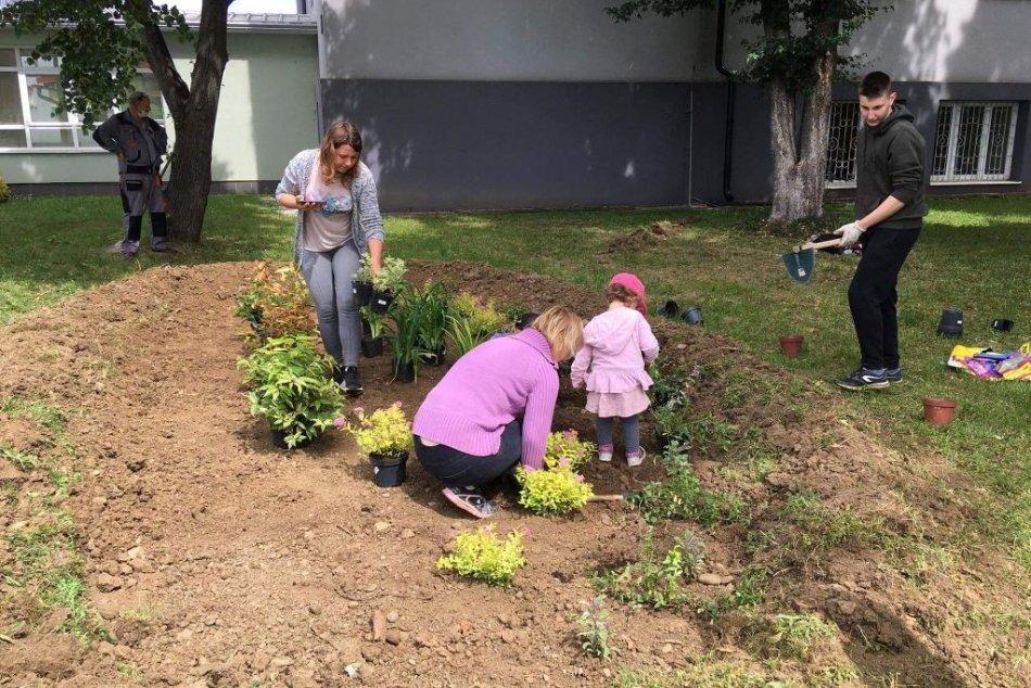 Ilustračný obrázok k článku Dažďové záhrady sa tešia obrovskej popularite: Pribudnú v celom kraji, FOTO