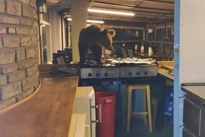 Ilustračný obrázok k článku Nezabudnuteľná návšteva v slovenskom hoteli: Medveď si to namieril do kuchyne!