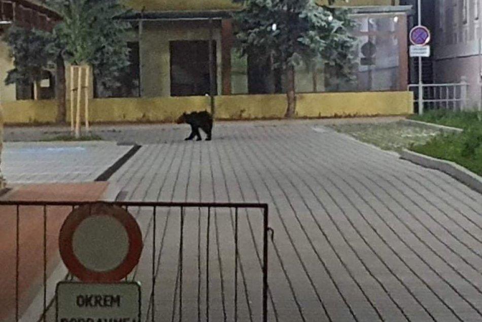 Ilustračný obrázok k článku Zásahový tím o medveďovi v Žiari: Odkiaľ prišiel a kde všade sa túlal?