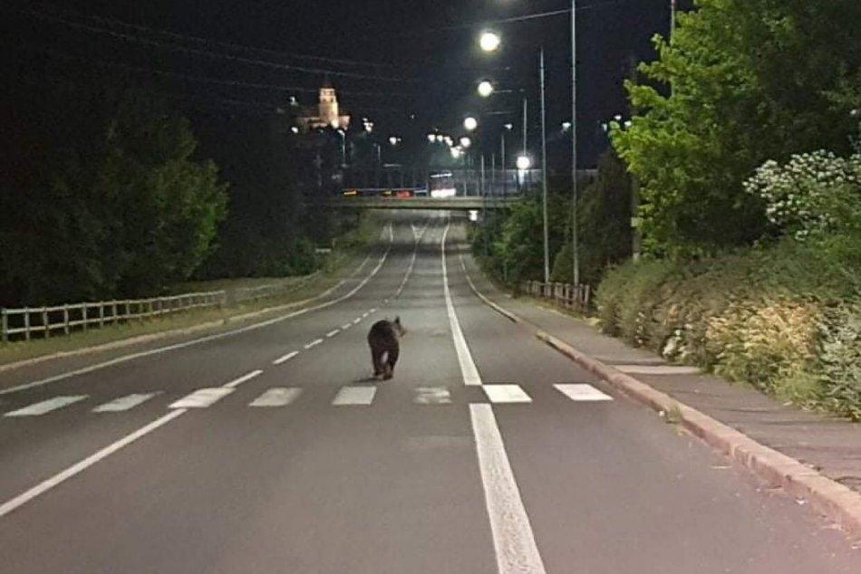 Ilustračný obrázok k článku KURIOZITA z Banskobystrického kraja: Medveď sa vybral do ulíc nočného mesta, FOTO