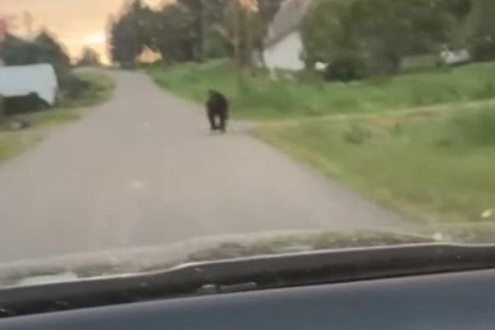 Ilustračný obrázok k článku Ďalšie VAROVANIE pred medveďom: Promenádoval sa medzi rodinnými domami! FOTO