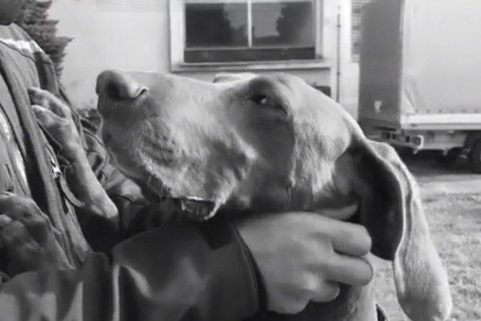 Ilustračný obrázok k článku Krajskí policajti smútia za štvornohým kolegom: Hugo odišiel do psieho neba, VIDEO