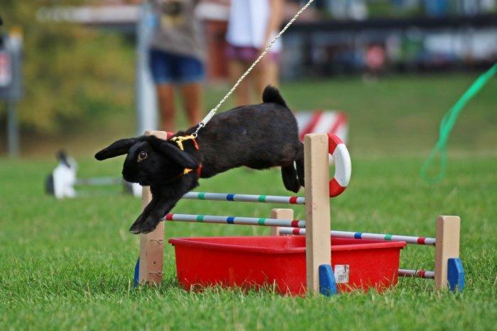 Ilustračný obrázok k článku TIPY na VÍKEND: Skočte si spolu s králikmi a šimpanzami na Stredoveký piknik ku kaštieľu