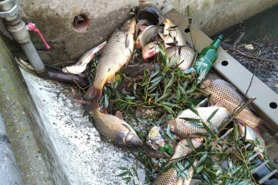 Ilustračný obrázok k článku Ekologická katastrofa pri Žiari: Masívny úhyn v Hrone zasiahol všetky druhy rýb