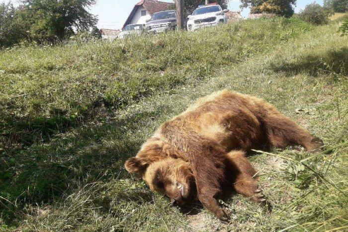 Ilustračný obrázok k článku Smutný pohľad na uhynutú medvedicu: Niekto ju popravil v obci pri kontajneroch!