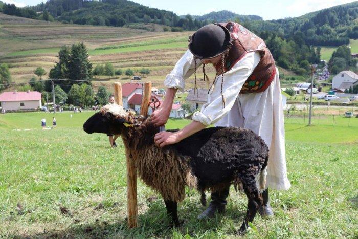 Ilustračný obrázok k článku Liptovská Lúžna hostila šampionát v strihaní oviec: Kam ide prestížny titul?