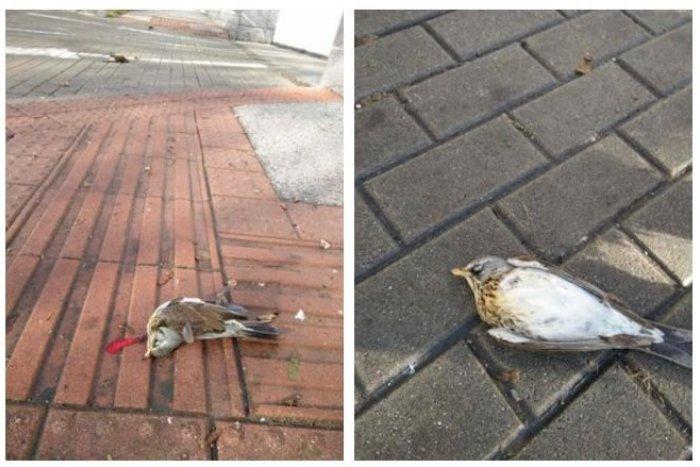 Ilustračný obrázok k článku MŔTVE vtáky okolo hotela v Starom Meste: Problém, pred ktorým by sa nemali zatvárať oči