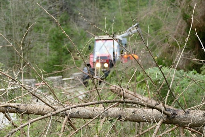 Ilustračný obrázok k článku Dôsledky smršte na severe Slovenska: Lesníci už narátali desaťtisíce kubíkov dreva