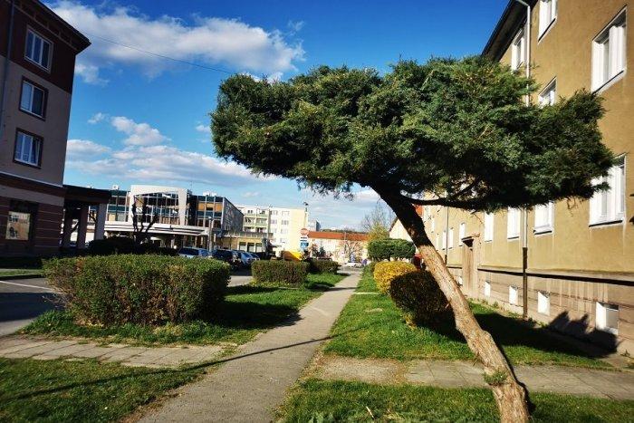Ilustračný obrázok k článku V Žiari pribudnú dažďové záhrady aj zelené strechy: Mesto získalo dotáciu na ekologický projekt