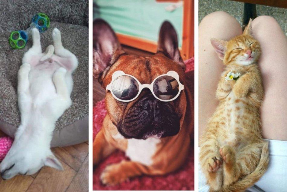 Ilustračný obrázok k článku Zábery, ktoré vám urobia deň: Revúčania sa podelili o vydarené FOTKY svojich miláčikov