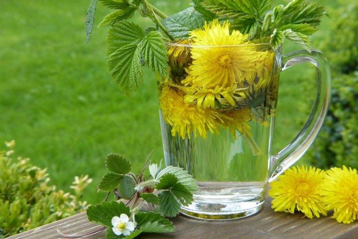 Ilustračný obrázok k článku Zázračná bylinka nám rastie priamo pod nosom: Púpava ako zázrak v boji proti rakovine!