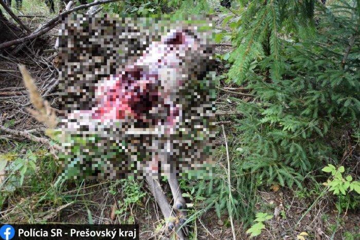 Ilustračný obrázok k článku Ohavný čin pytliaka: Sledujte, čo spravil nevinnému jeleňovi! FOTO