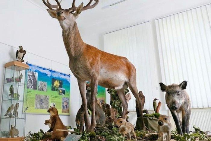 Ilustračný obrázok k článku Milovníci prírody, NEVÁHAJTE! Ponorte sa do sveta rastlín a živočíchov