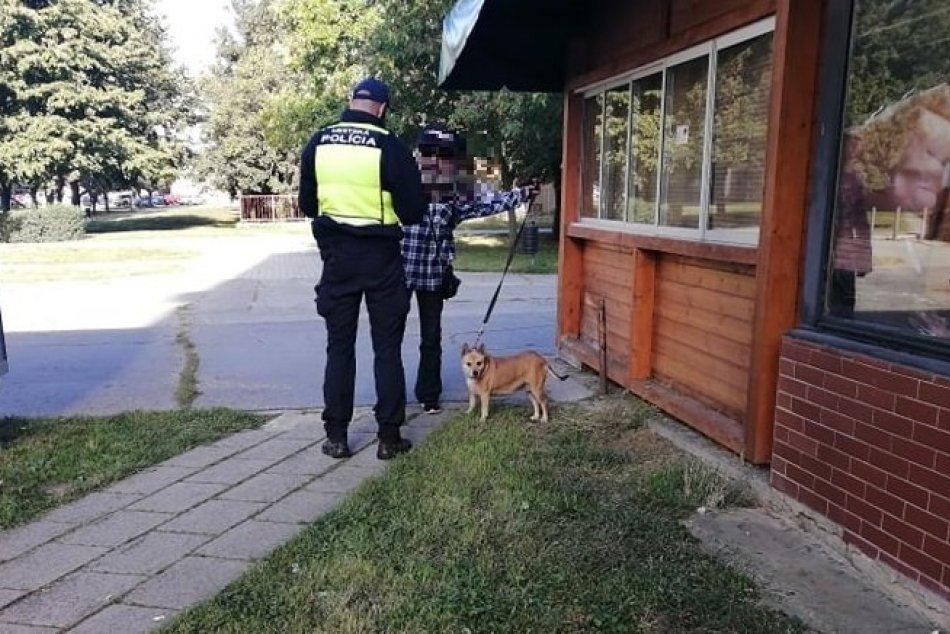 Ilustračný obrázok k článku Mestskí policajti si posvietili na zvolenských psíčkarov: Čím sa previnili najčastejšie?