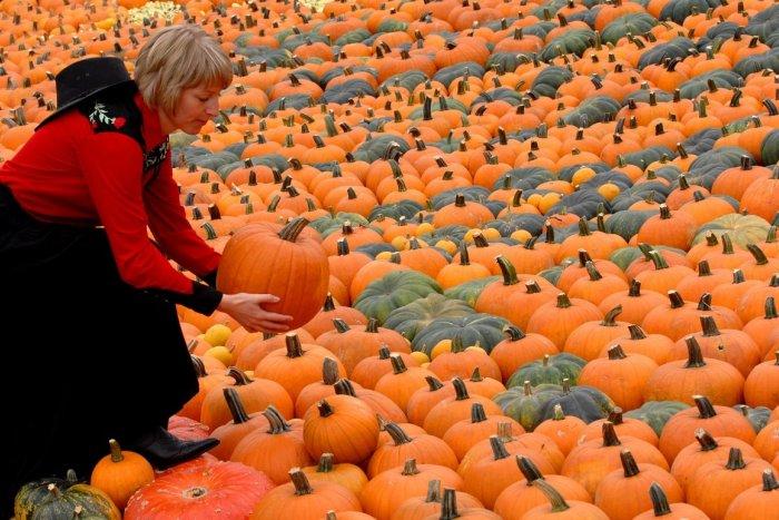 Ilustračný obrázok k článku TIP na halloweenske tekvice: Pri Nitre sa bude konať samozber