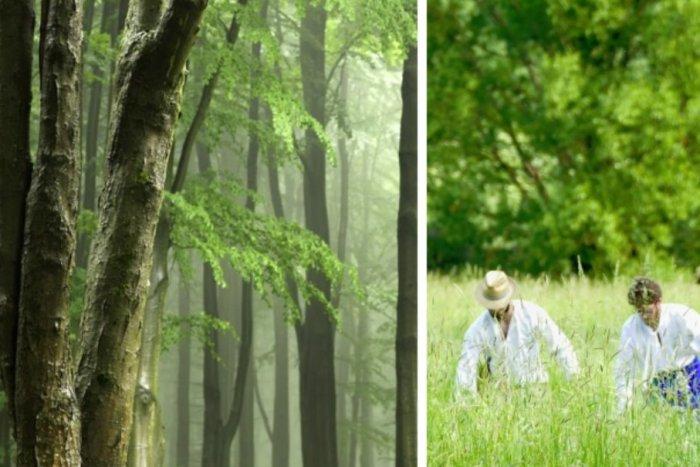 Ilustračný obrázok k článku Kútsky les ako z iného sveta: Pripomína tropický prales, v ktorom bol aj Napoleon II.