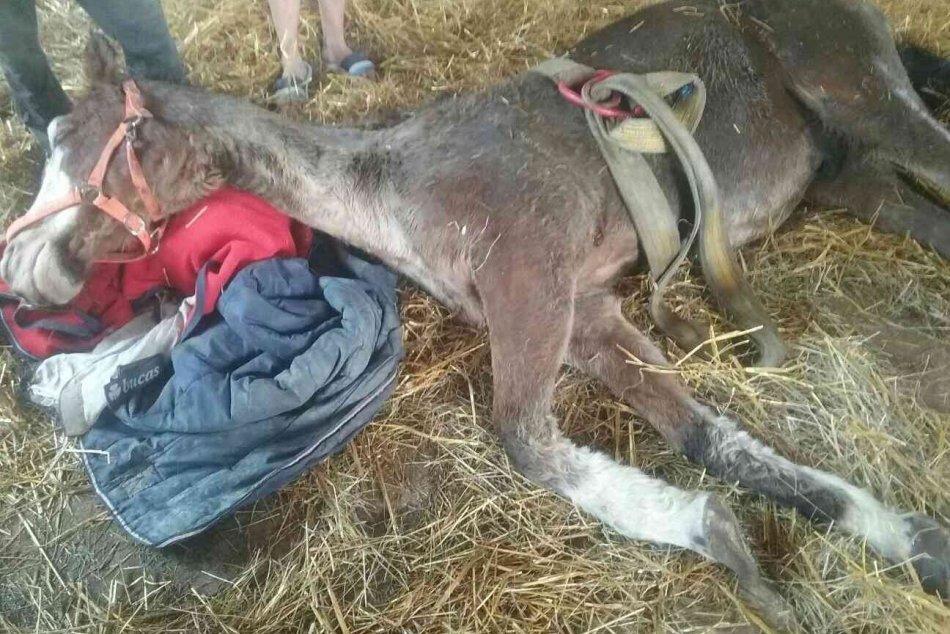 Ilustračný obrázok k článku Zvolenských hasičov obdarovali za záchranu koňa: Teraz už ľahšie pomôžu aj ďalším, FOTO