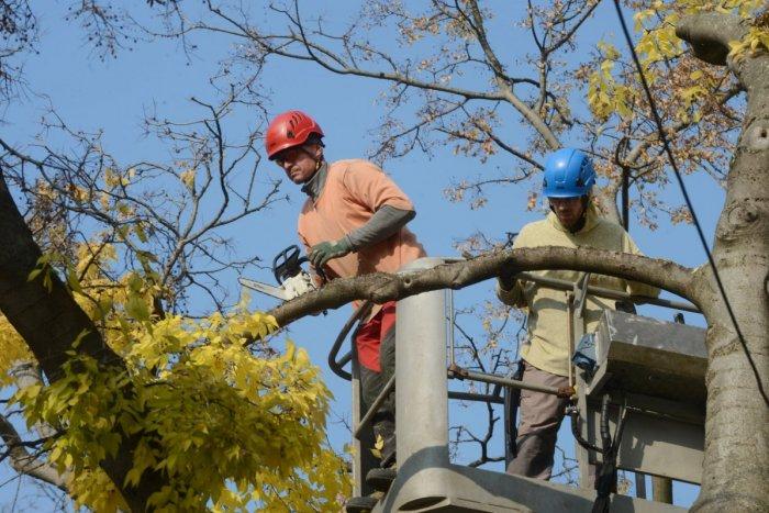 Ilustračný obrázok k článku Trnavčania s domami, chystáte sa OPILOVAŤ stromy? Prišlo k ZMENE v pláne zberu orezov